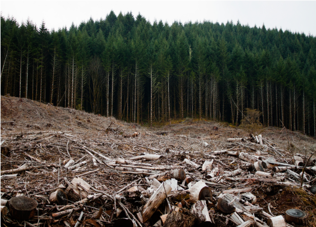 Clearcutting